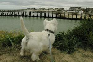 Marty pe Plajele Debarcarii - Normandia