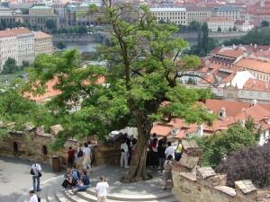 Praga - In curtea Castelului