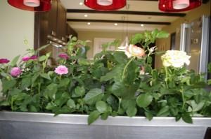 Jardiniera cu trandafiri din dining