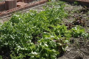 Telina si salata dupa ce le-am descoperit si curatat