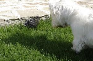 Marty impreuna cu noul lui prieten - puiul de porumbel care a cazut din cuib