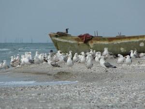 Companionii nostri de pe plaja