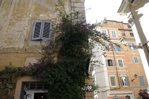 Colt de caldire in Trastevere