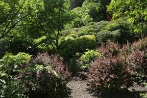 Gradina Japoneza din Gradina Botanica