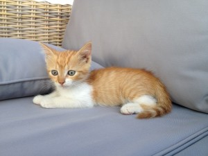 Focutza se relaxeaza pe canapeaua de pe terasa