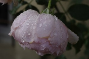 Dimineata, dupa ploaie