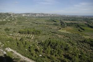 Peisaj obisnuit in Provence - livezi de maslini