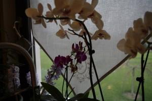 Crengute incarcate de flori