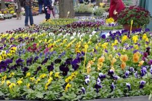 Multicolorele isi asteapta cumparatorii