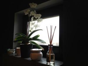 ... orhideea isi spune povestea