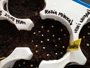 Semintele aranjate pe pamant si etichetate