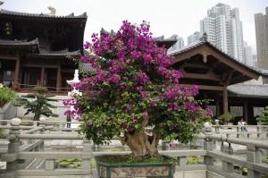 Arta bonsailor este etalata in curtile templelor