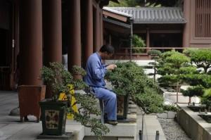 In linistea curtii unei manastiri, un ingrijitor de bonsai isi vedea de treaba