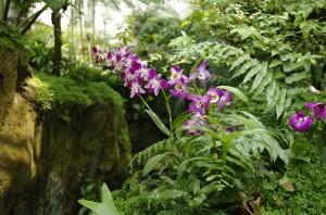Orhidee intalnesti peste tot