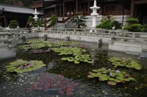 Manastirea are patru iazuri cu lotusi