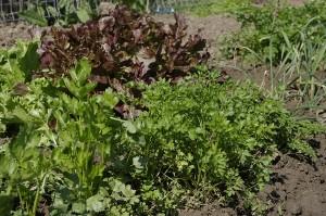 Primavara in gradina de legume