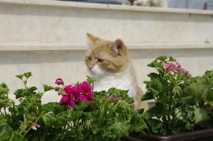 Si Focutzul printre flori