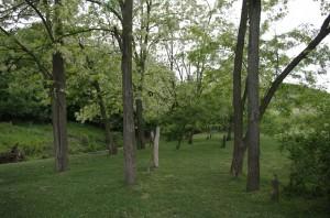 In apropierea raului, iarba este mai verde