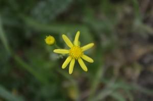 Flora de inceput de vara