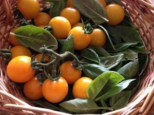Primele tomate din gradina si bucuioc pentru uscat