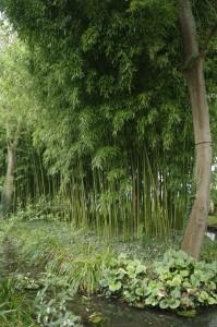 Coltul cu bambusi