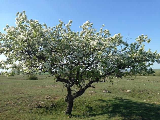 """""""Un copac cu flori"""""""