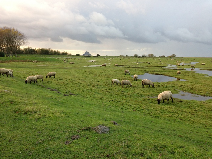 "Peisaj pastoral ""a la Normandie"""