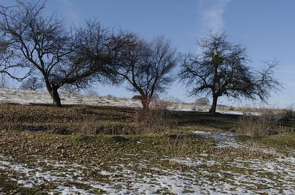 Pe dealurile din jurul Viscri - ului