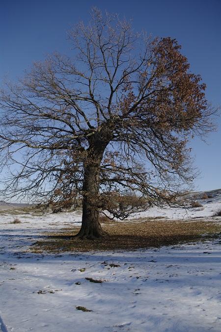 Si copacul singuratic...