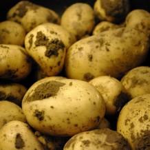 Cum si cand se planteaza cartofii