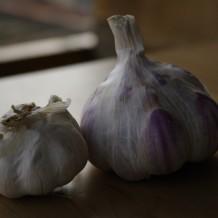 Plantarea usturoiului de toamna